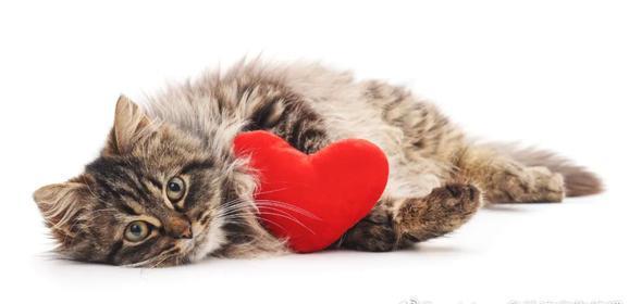 """猫咪""""最珍惜""""的几样东西,如果都让你碰,说明它很信任你"""